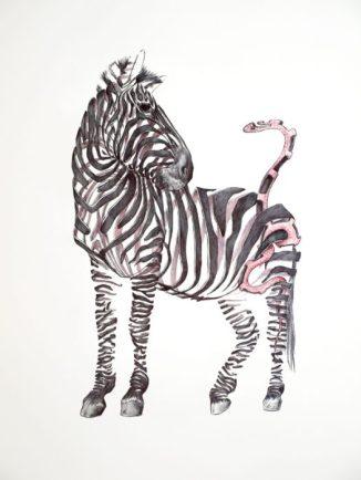 Cebra con serpiente: 65x50 cm. – Ballpoint pen on paper, 2013 - AVAILABLE